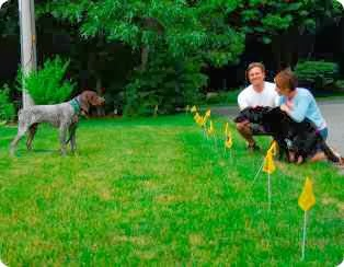 ELECTRIC FENCE FOR DOGS | DOG FENCING | PET FENCING