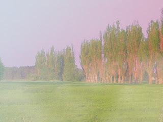 Łąki za Lubartowem
