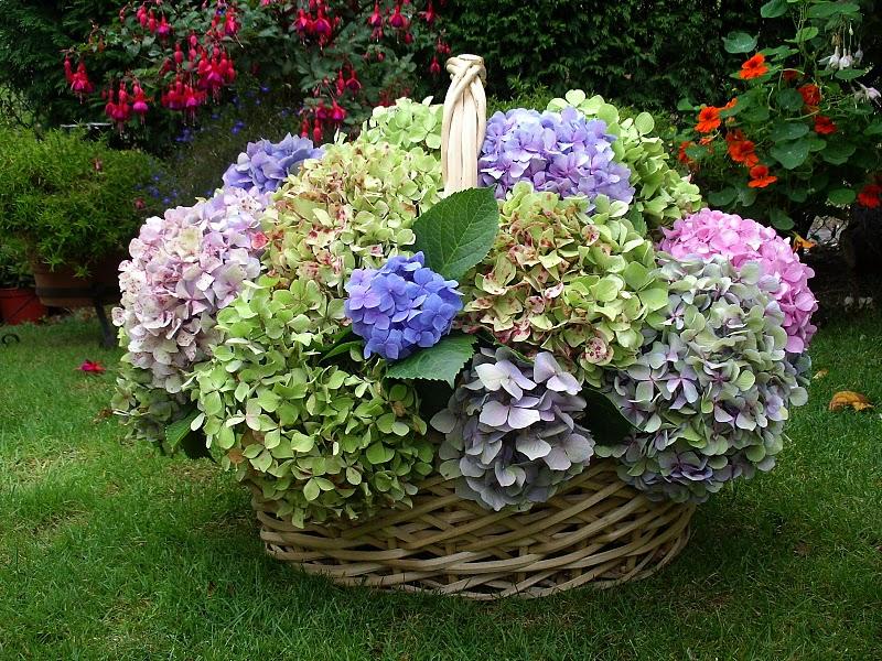 Vó Mocinha~ Flores Para Jardim Azuis