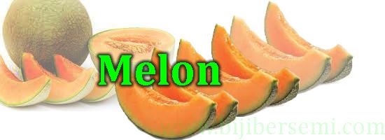 melon, buah melon, cara menanam melon dari biji, cara menanam melon yang benar, manfaat buah melon, jenis-jenis melon