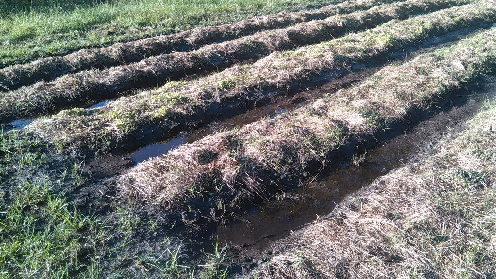 red robin farm high field low field