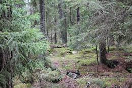 Höst skog