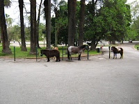Ponies are waiting for children to take a tour