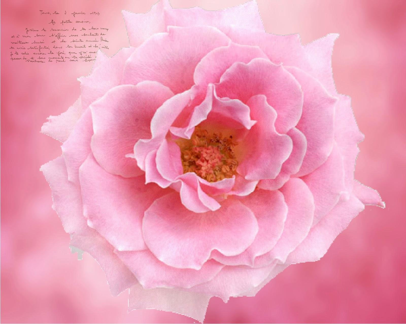 http://2.bp.blogspot.com/-a7YQJippc38/UuhZUNhF5AI/AAAAAAAAEpo/_Z630z1LerQ/s1600/102+larger+picture.jpg