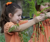 Children picking carrots from a garden
