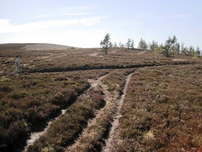 Junction in the walk, north Deeside