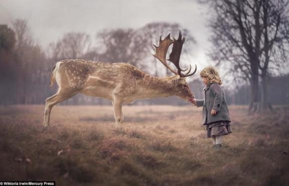 Toddler Feeds Big Deer From Her Hand in Phoenix Park