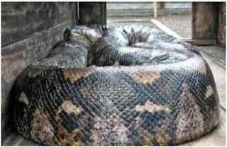 foto ular raksasa - gambar hewan