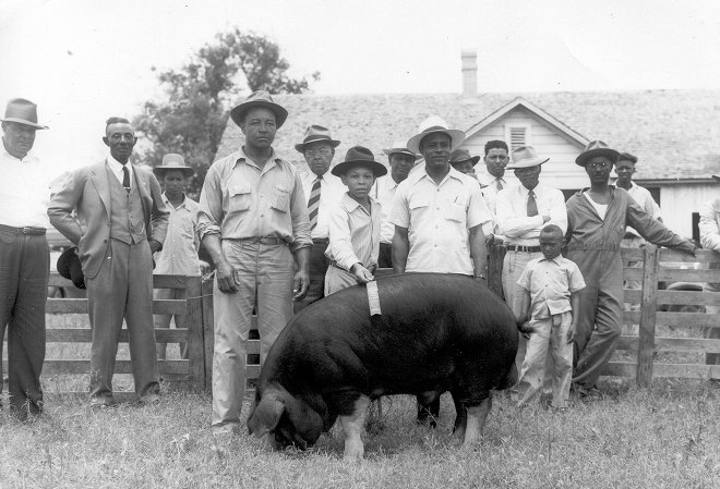 african american farmers in the not so olden days americansAmerican Farmers Working