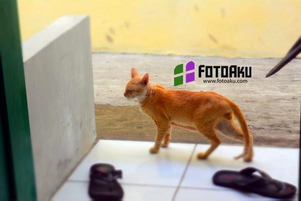 Kucing Lewat