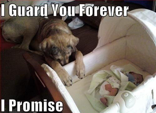 Dog Guards Baby For Lifetime