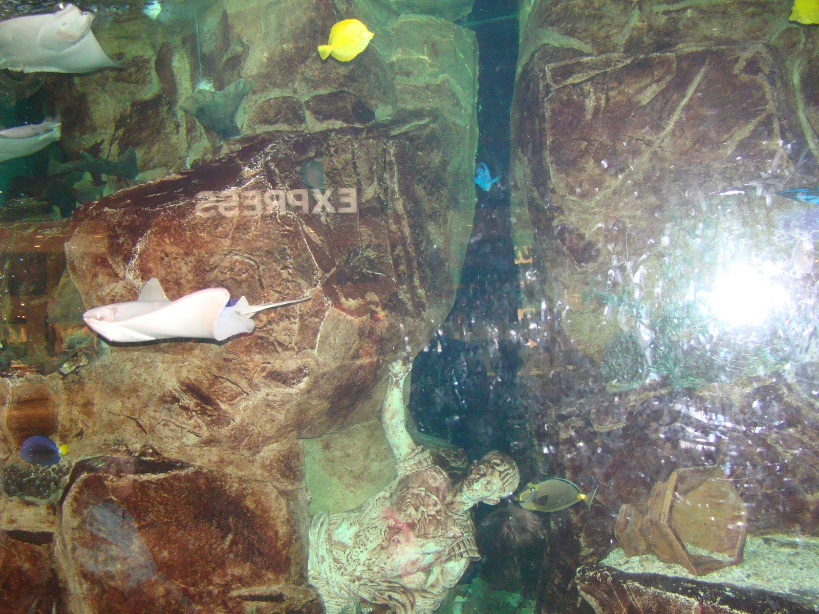 Are we there yet my travel blog las vegas caesars the for Caesars tropical fish