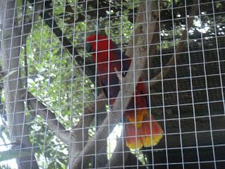 Cebu Zoo Parrot