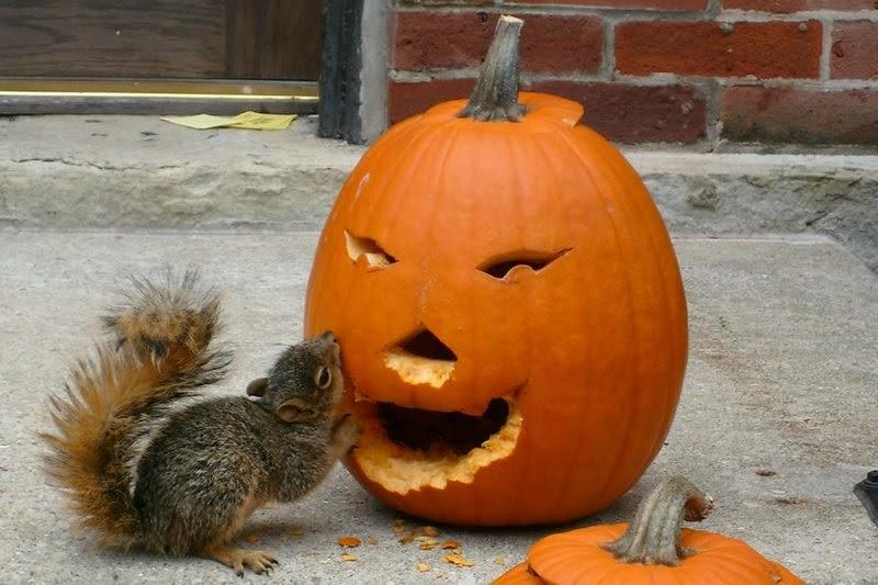 Funny halloween animals2-4
