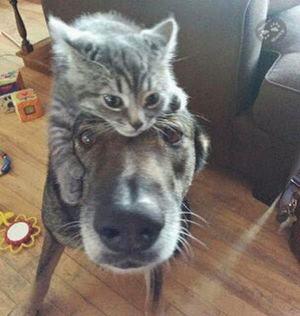 funny animals of the week, animal photos