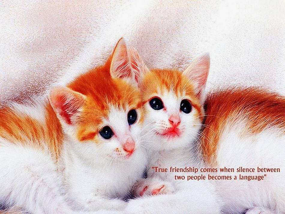 http://www.funmag.org/creative-inspiration/good-friendship-quotes/