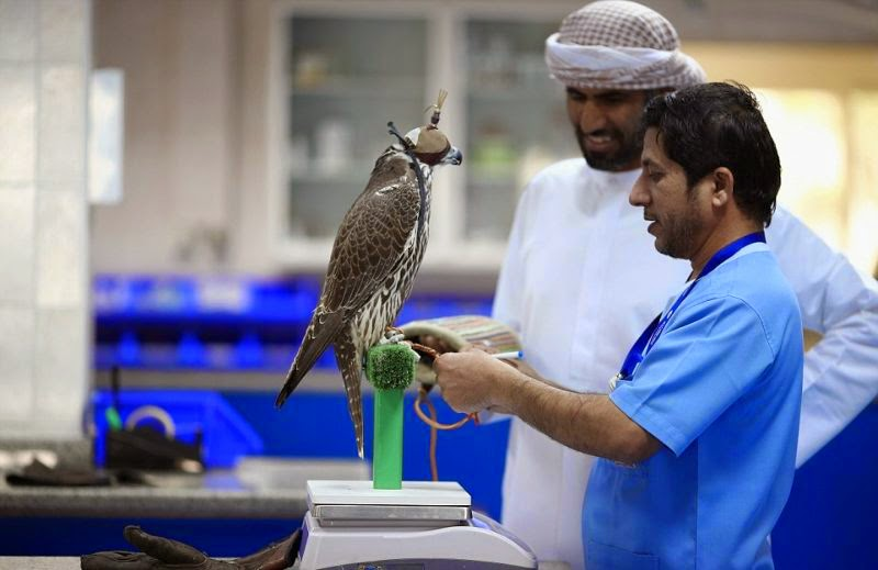 gambar burung garuda terbesar