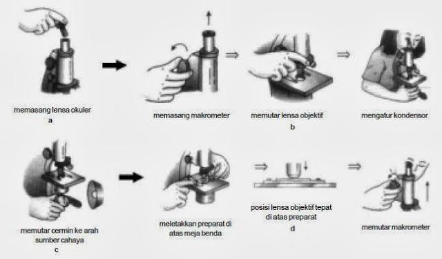 Cara Menggunakan dan Merawat Mikroskop
