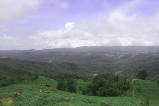 Photograph taken at Mandalpatti, Coorg by Manju Panchal