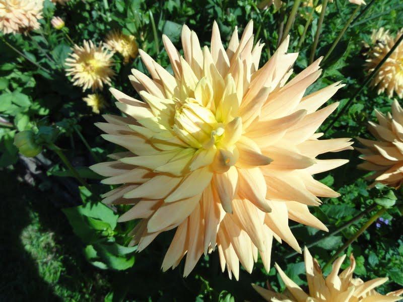 Image Result For A Fleur De Toi Parolea