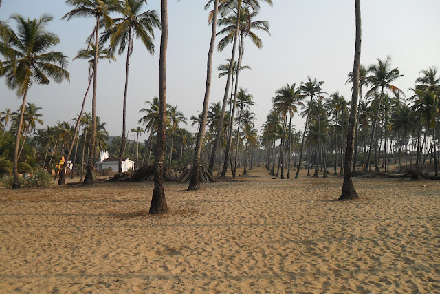Роща из кокосовых пальм