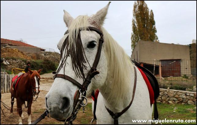 Rutas-caballo-equitación-Gredos_2