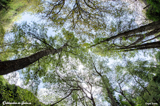 Los árboles arropan todo el camino