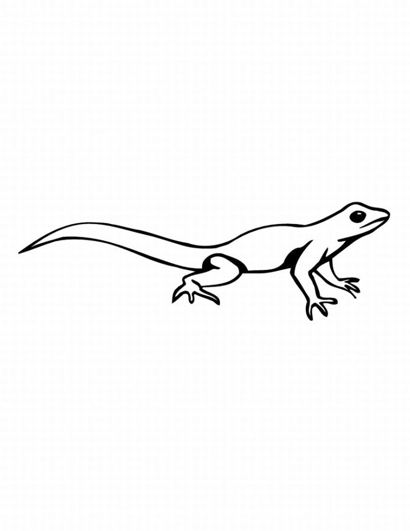 Line Drawing Lizard : Easy simple lizard drawing pictures to pin on pinterest