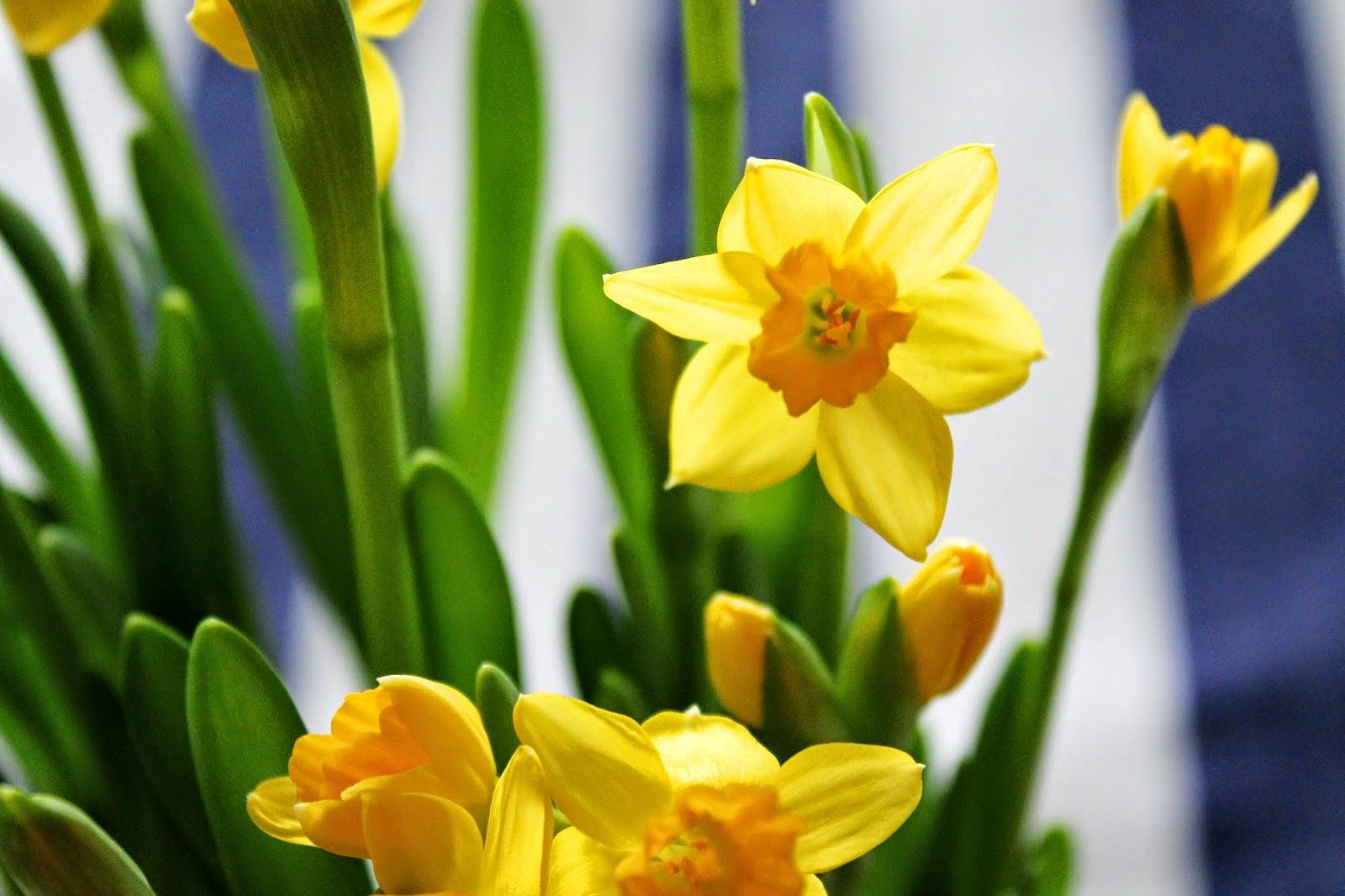 Flowers | Alinan kotona blog