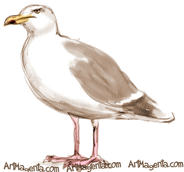 Glaucous Gull sketch painting. Bird art drawing by illustrator Artmagenta.