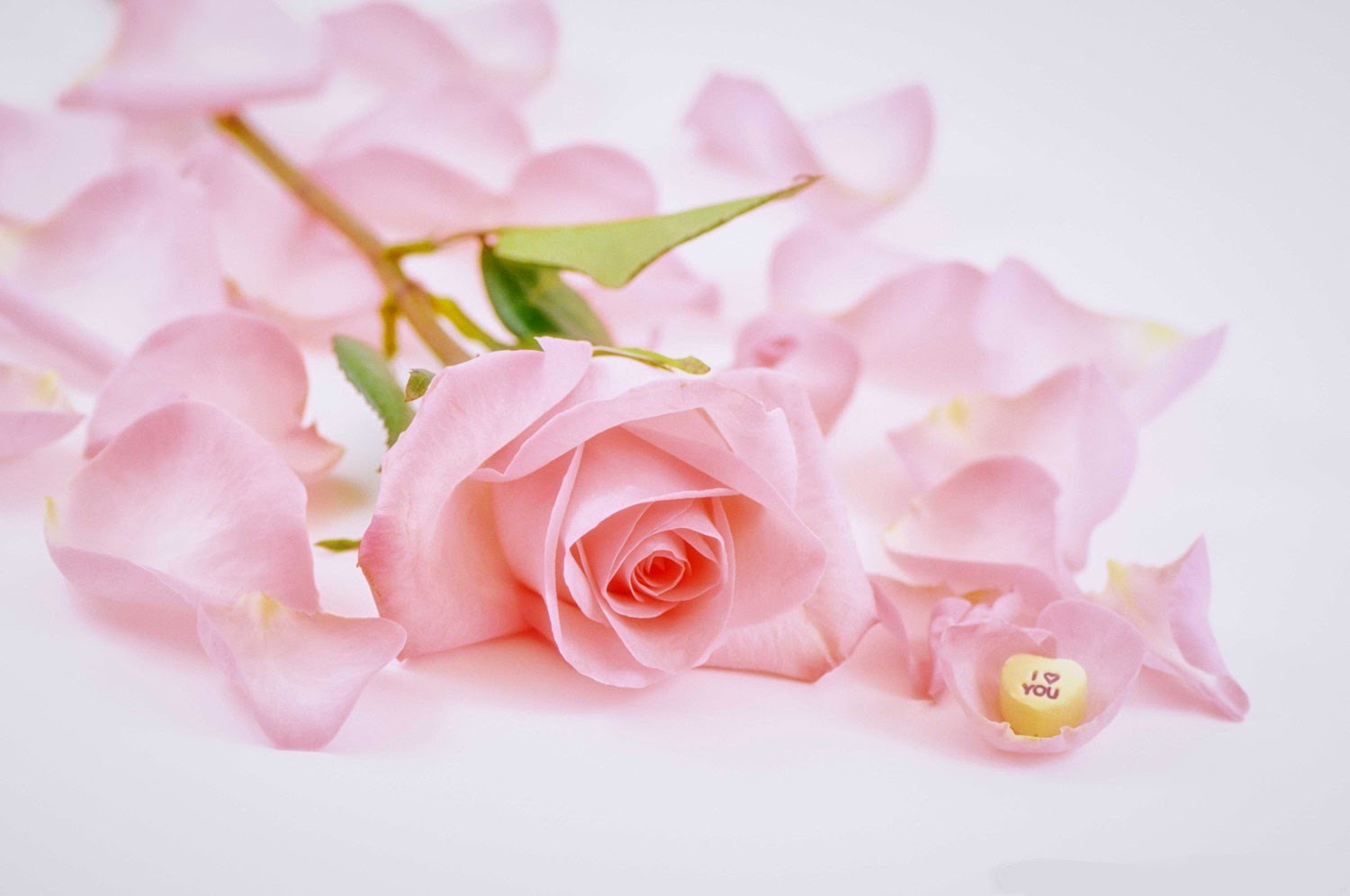 Pink Rose Heartshttp://my143rose.blogspot.com/