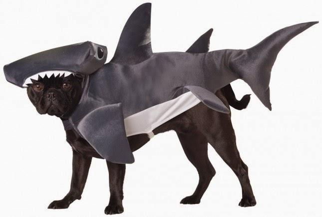 10 Disfraces Divertidos para Mascotas