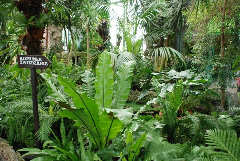 zielona metamorfoza