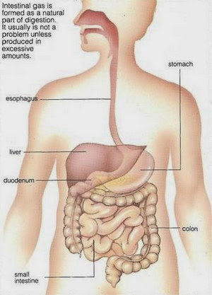 Stomach gas and flatulence what are gas and flatulence second as you digest food digestive gases such as hydrogen methane and carbon dioxide collect either case can cause flatulence ccuart Gallery