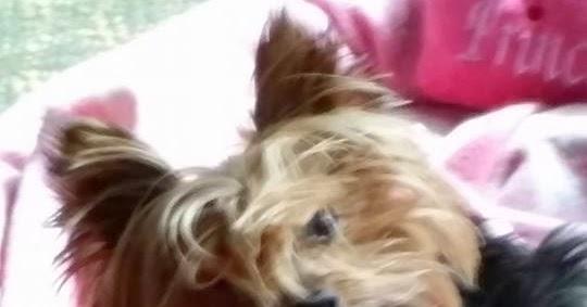 Best Dog Anti Chewing Spray