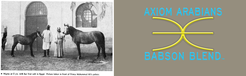 Babson Blend TM  Axiomarabians.com