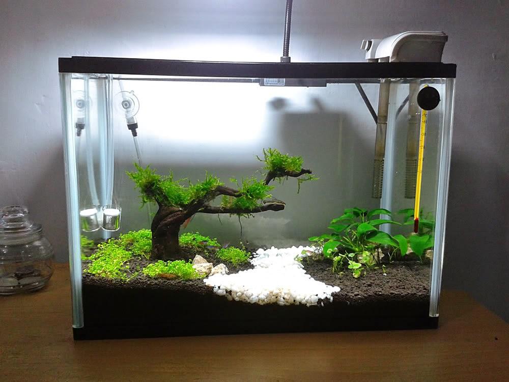 Inilah 10 Ide Kreasi Untuk Membuat Mini Aquascape Ikan Hias Air Tawar