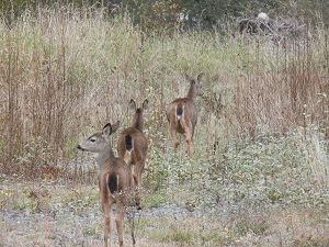 Deer reminds us to face our fears with gentleness; don't push to hard. Keep your heart open.