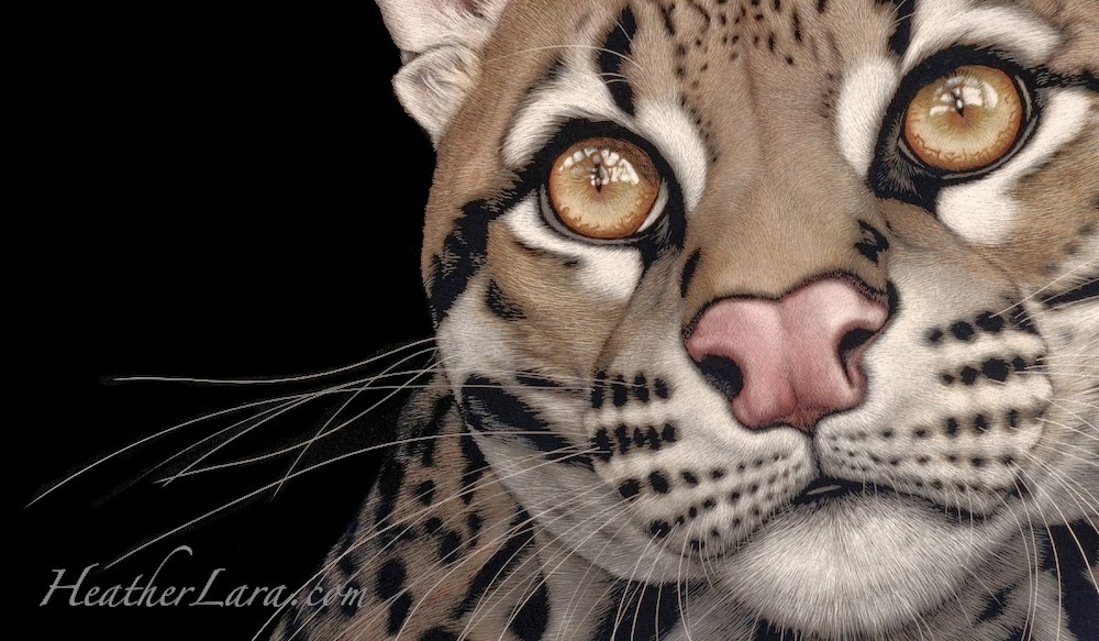 03-Cat-Heather-Lara-Hyper-realistic-Animal-Scratchboard-Drawings-Wildlife-www-designstack-co