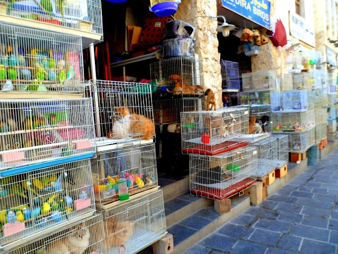 Qatar Live animal Selling area of Souq Waqif