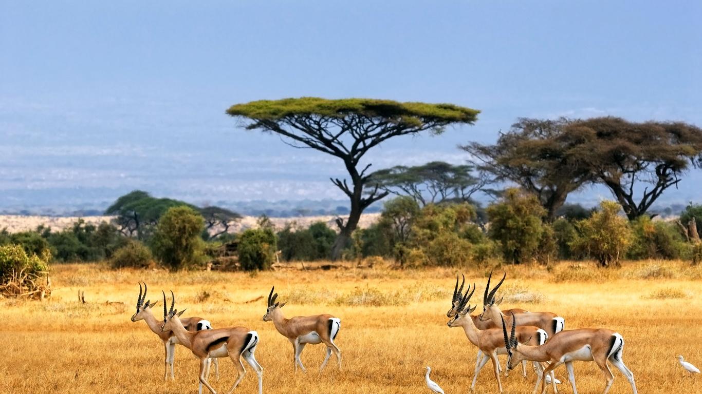 C lestine la savane africaine - Animaux savane africaine ...