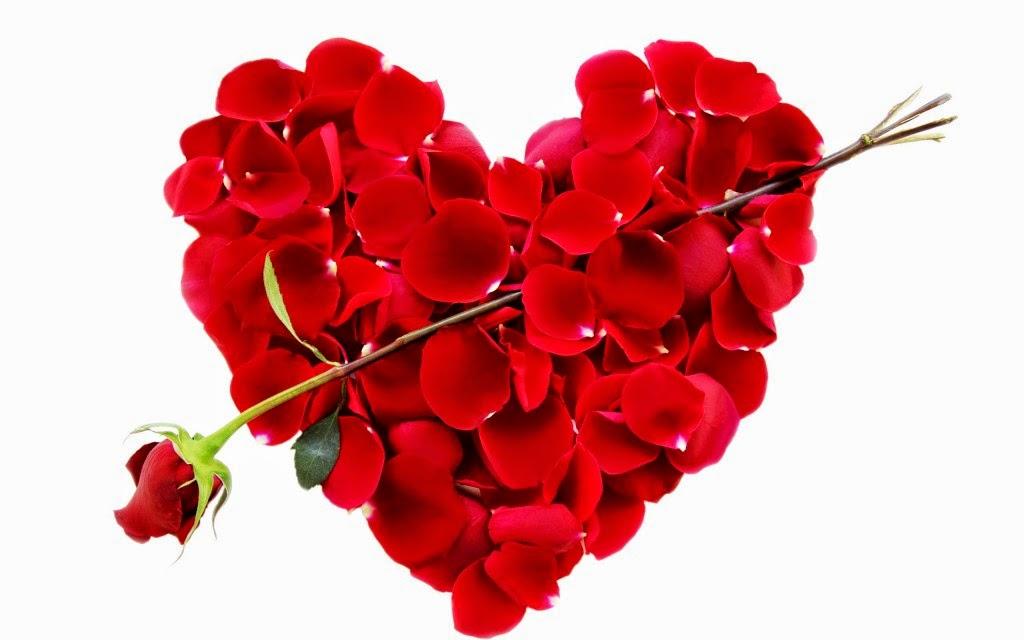 أجمل صور الورود الحمراء