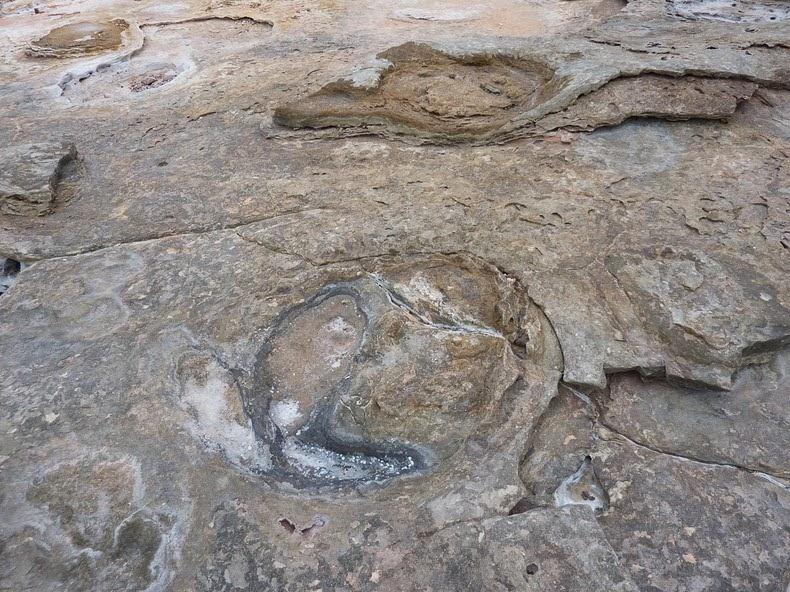 آثار أقدام الديناصورات في نقطة جانثيوم في مدينة بروم استراليا