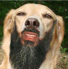 Bukankah ini wajah Osama?