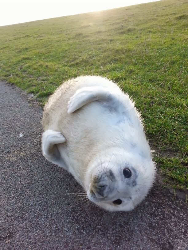 Funny animals of the week - 27 December 2013 (40 pics), cute baby seal pic