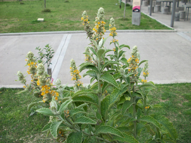 Vivero el gringo lista de plantas nativas for Vivero plantas nativas