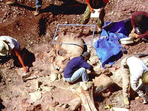 Grande descoberta arqueológica