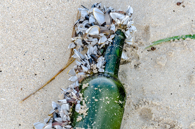 shells attached to bottle lying on beach
