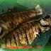 Tips Masak Ikan Banyak Tulang