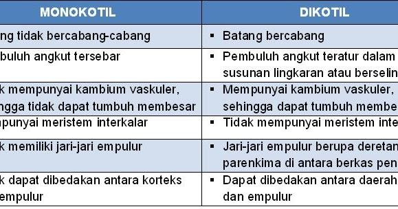 nr: b. Perbedaan Batang Monokotil dengan Dikotil